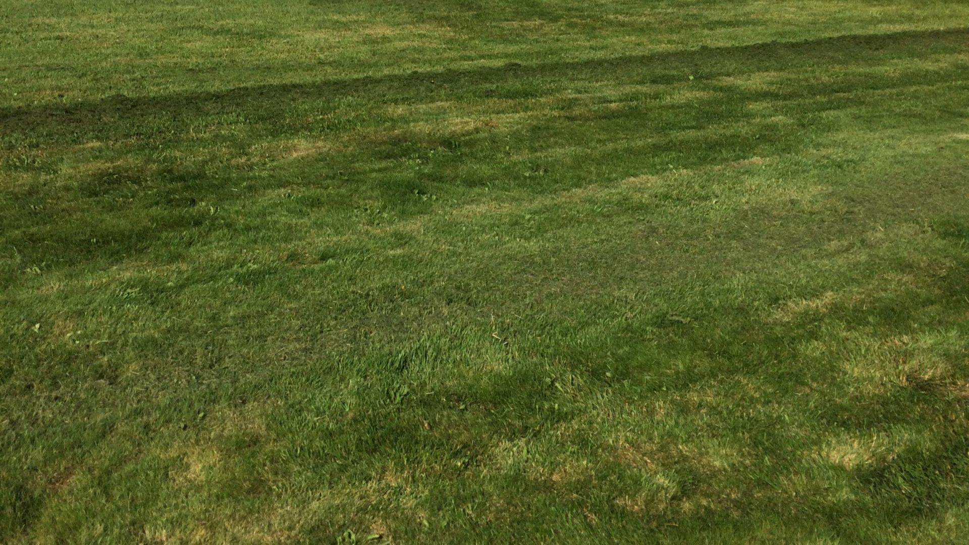 nýslegið gras